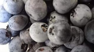 blueberry19.JPG