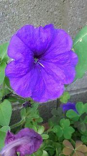 flowerhamura.jpg