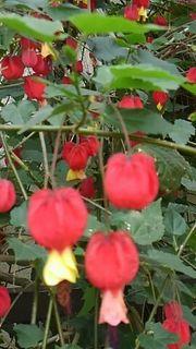 flowerhamura1.jpg
