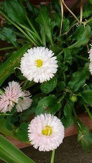 flowerhamura2.jpg