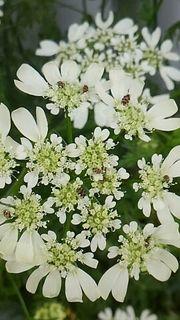 flowerhamura3.jpg