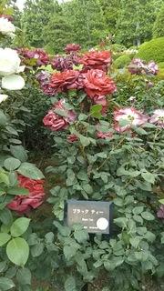 gyoen5.JPG