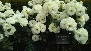 gyoen9.JPG