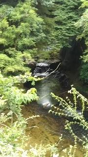 kameiwa1.JPG