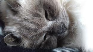 sleepbaby.JPG